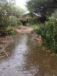 "6-16-18 Ex-hurricane Bud 1.5"" rain puddle"